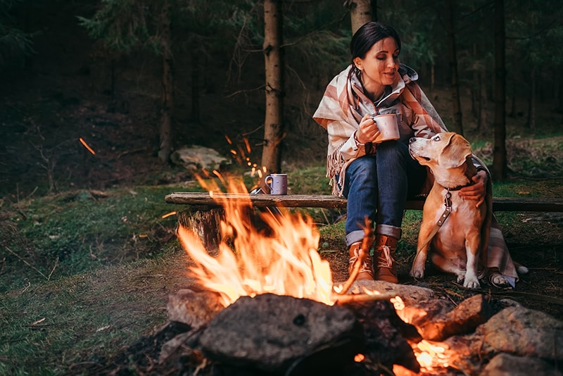 Nights Under the Stars: Camping with Dogs