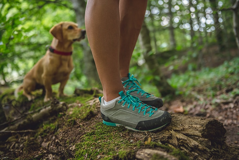 The Trail Runner's Guide to Dogs